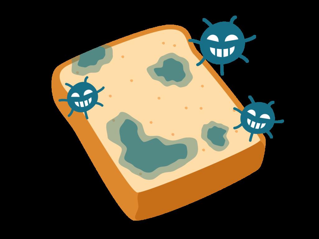 食パンに生えたカビ
